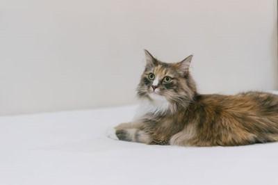 s-cat9302328.jpg